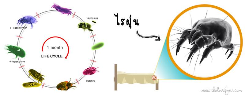 Protect-a-bed-lovelyair.com-blog3