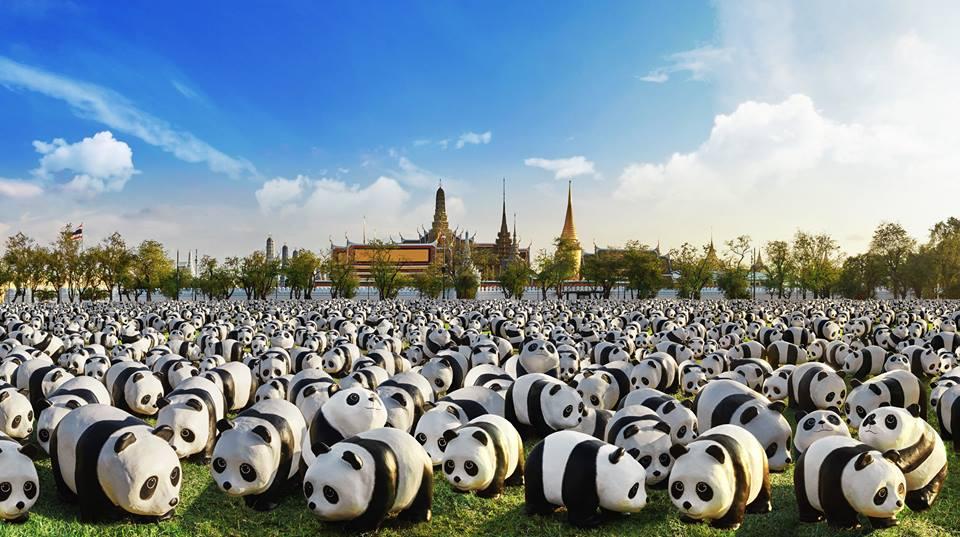1600 Pandas-01
