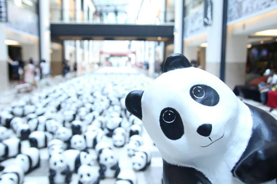 1600 Pandas-03