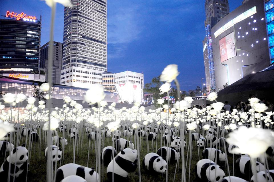 1600 Pandas-04