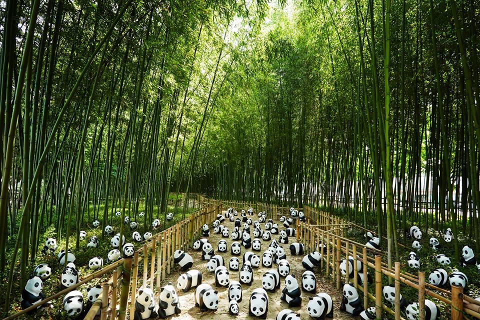 1600 Pandas-05