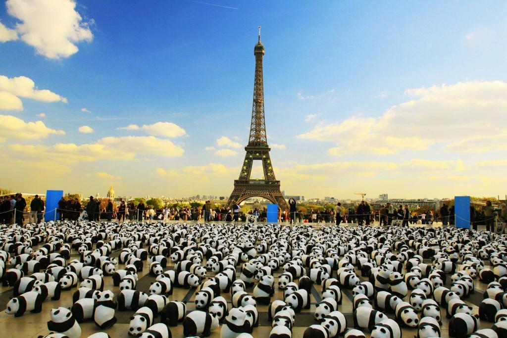 1600 Pandas-06