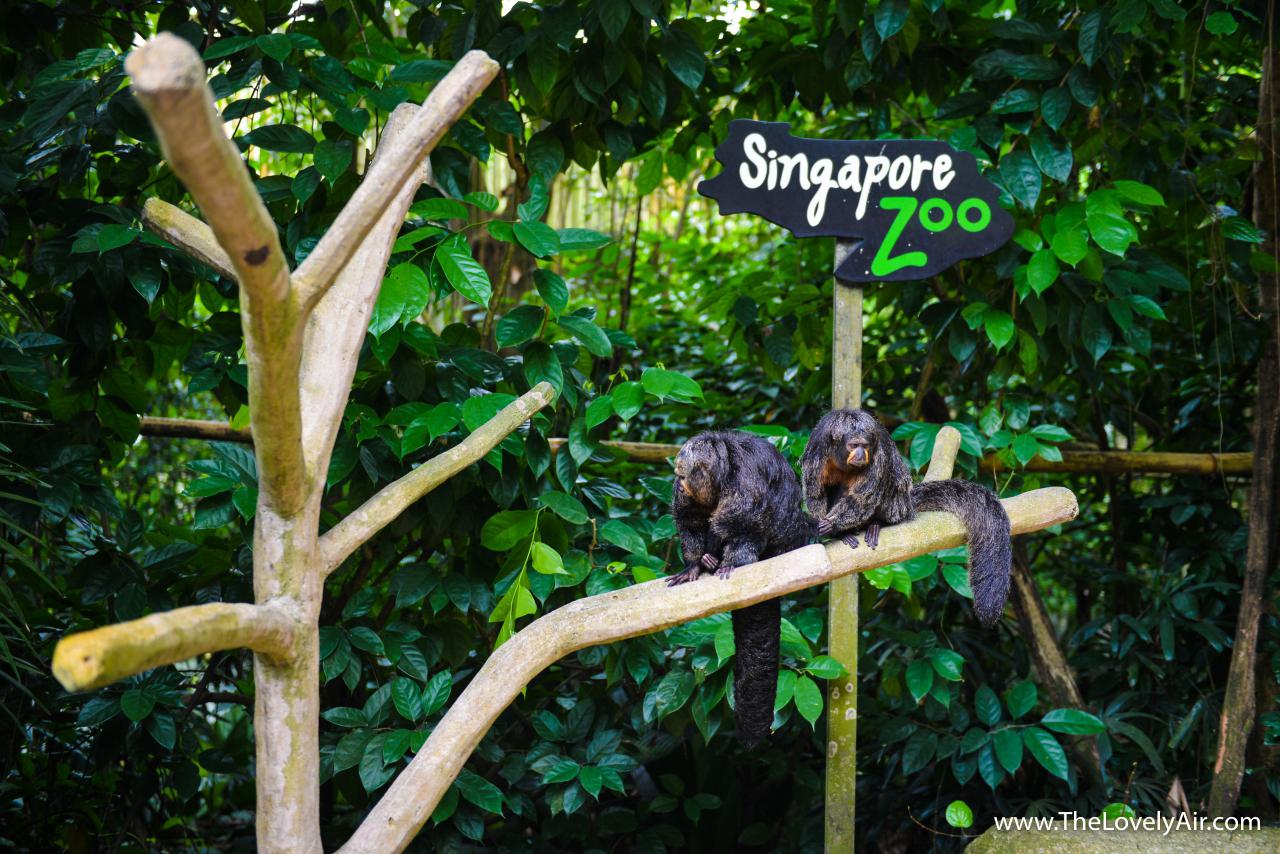 SingaporeRZ-015-2