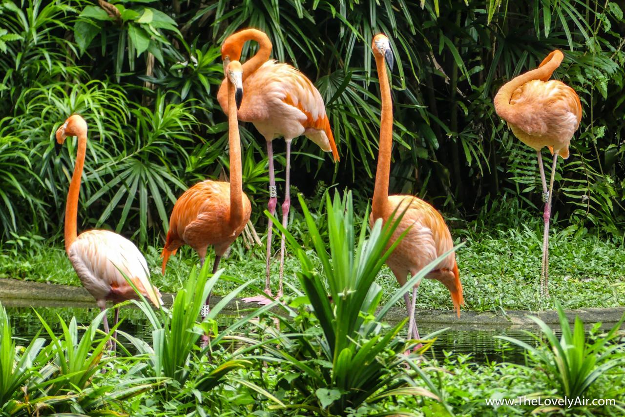 Singapore Zoo-105-2