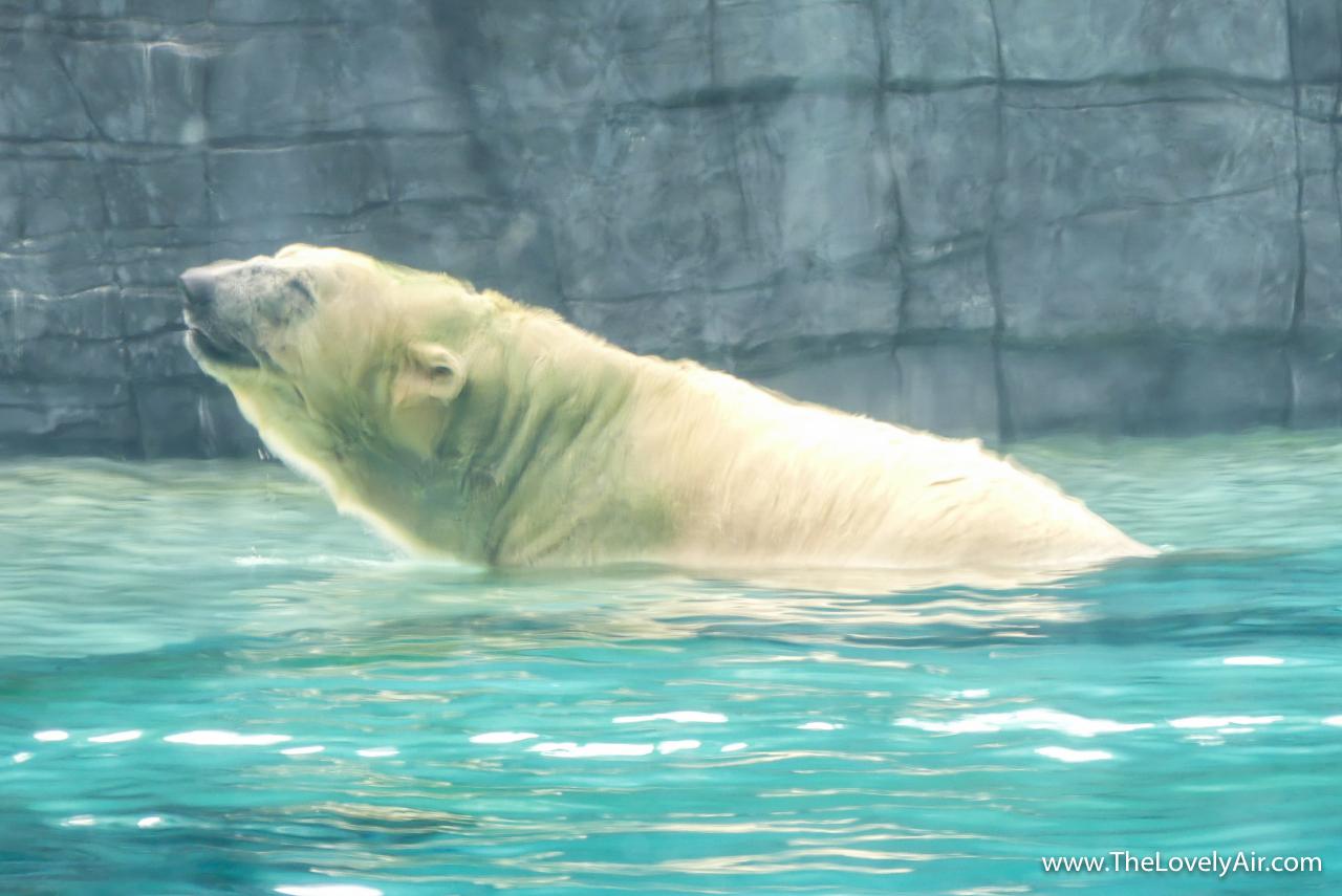 Singapore Zoo-106-2