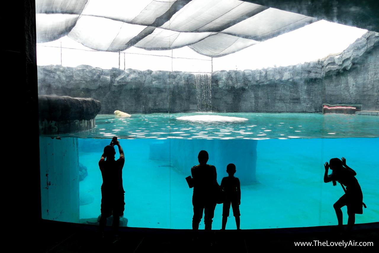 Singapore Zoo-107-2
