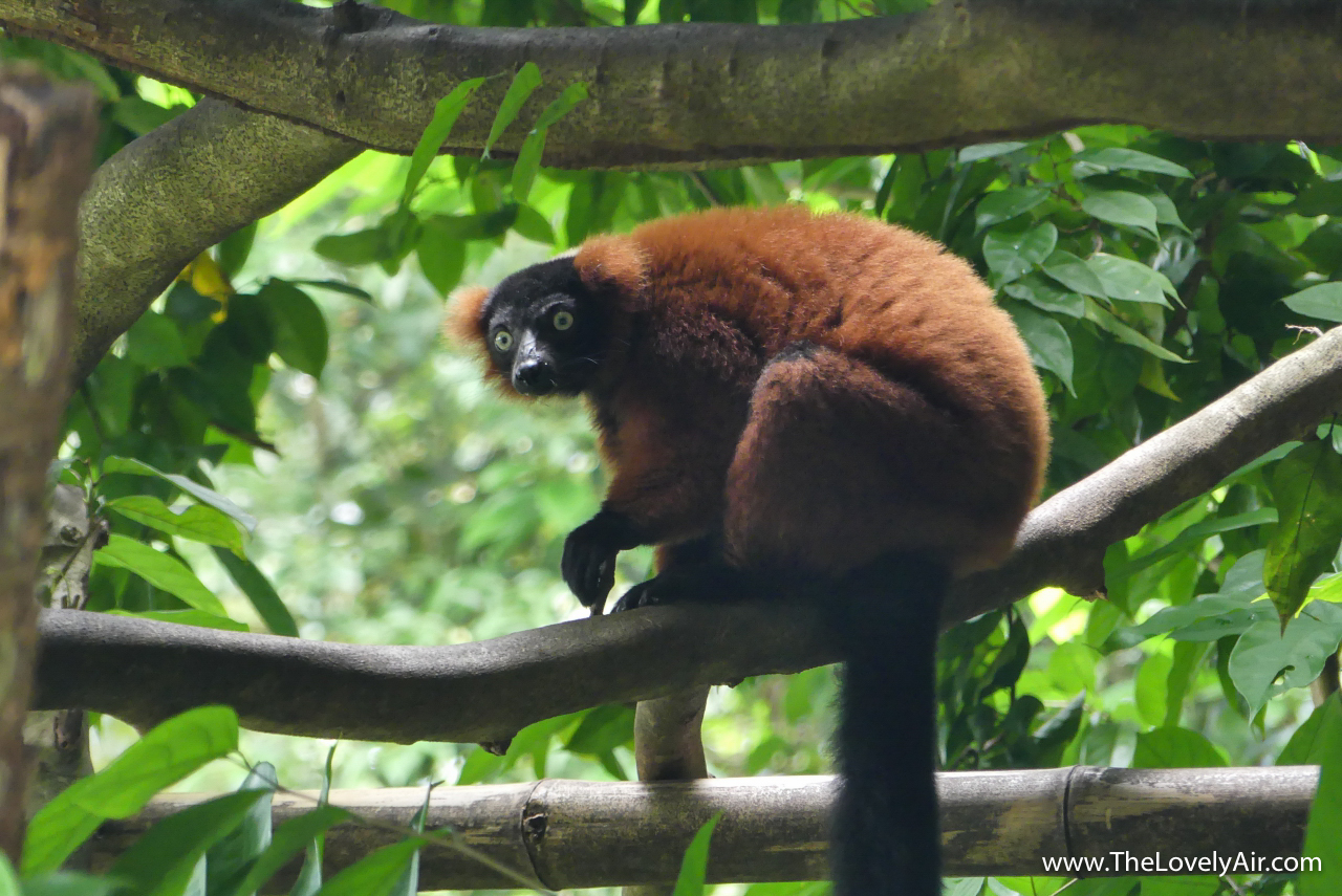 Singapore Zoo-108-2