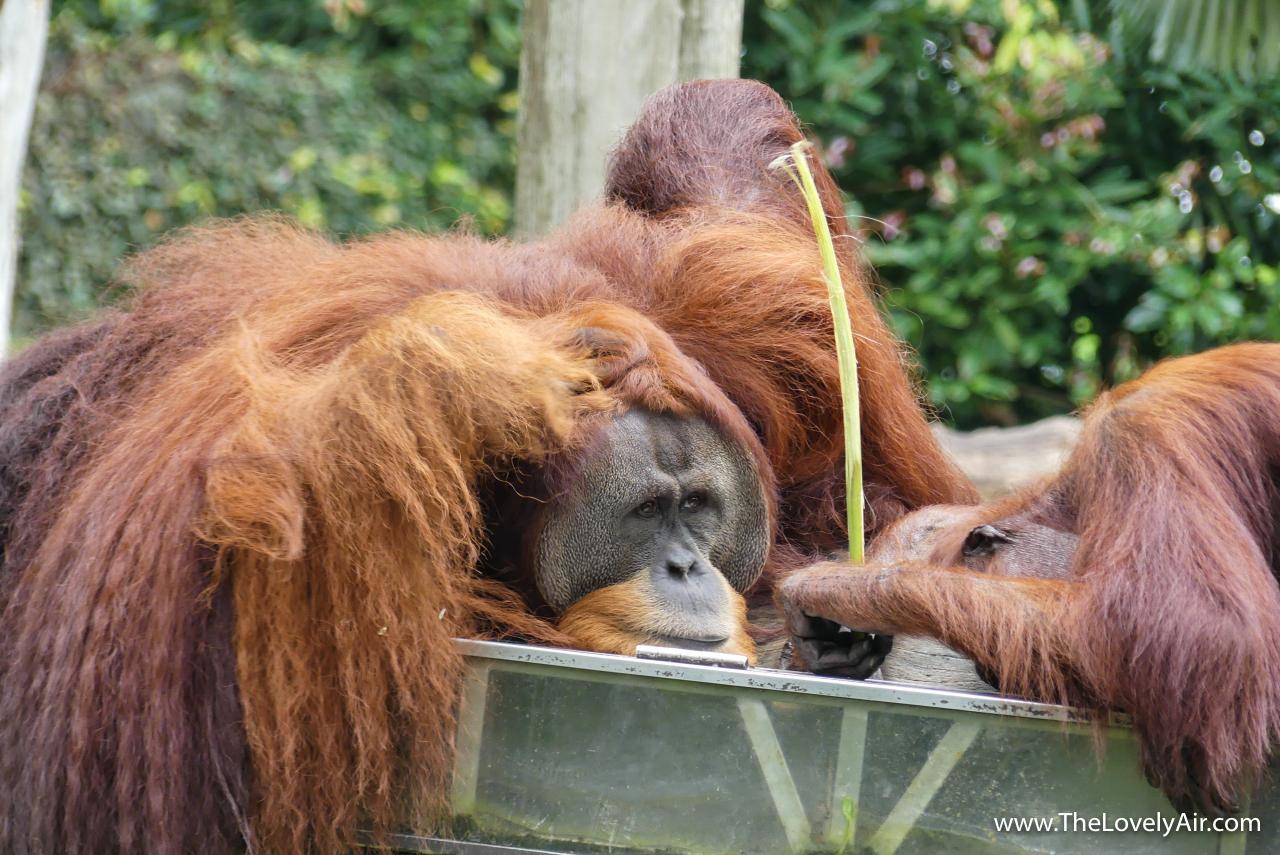 Singapore Zoo-109-2