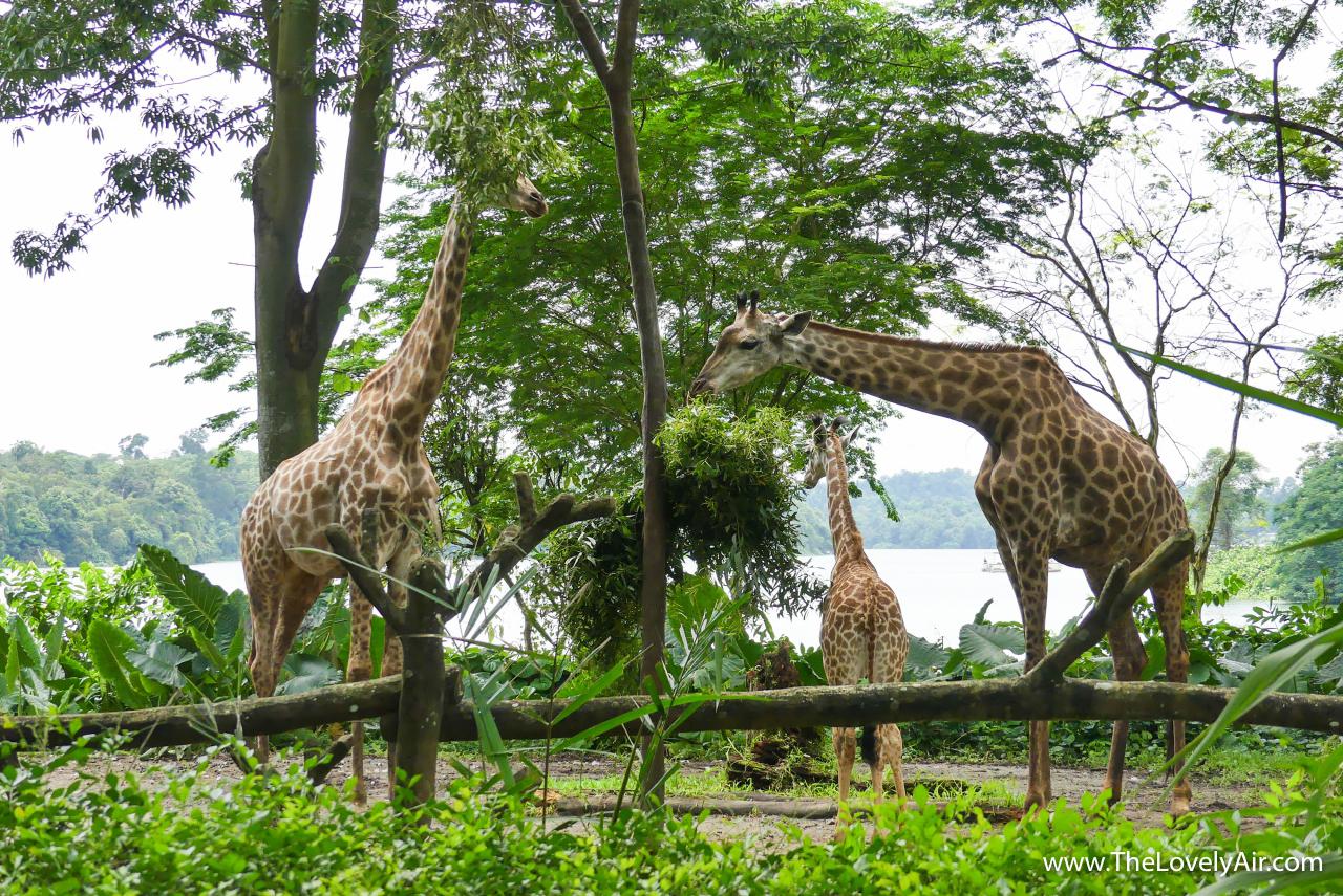 Singapore Zoo-110-2