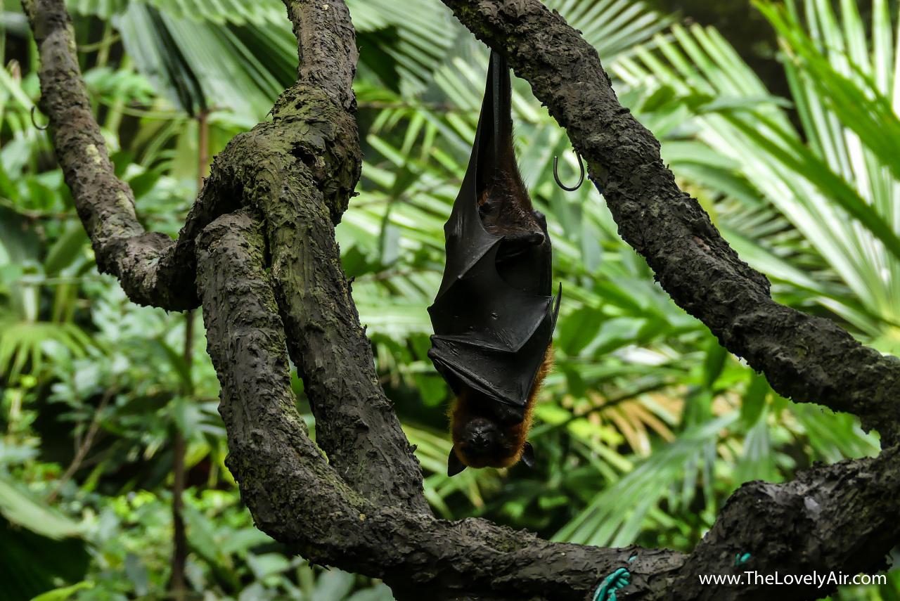 Singapore Zoo-113-2