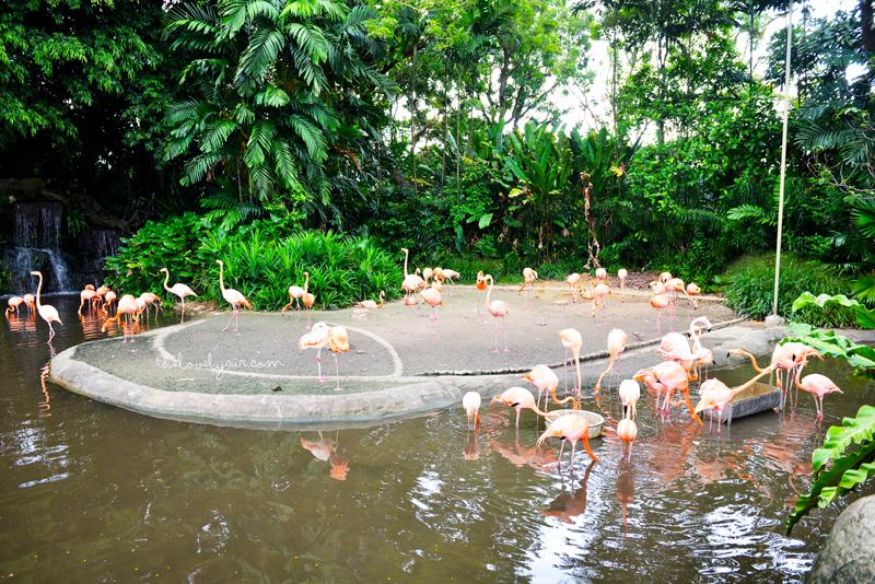 Jurong-Bird-Park-lovelyair-10