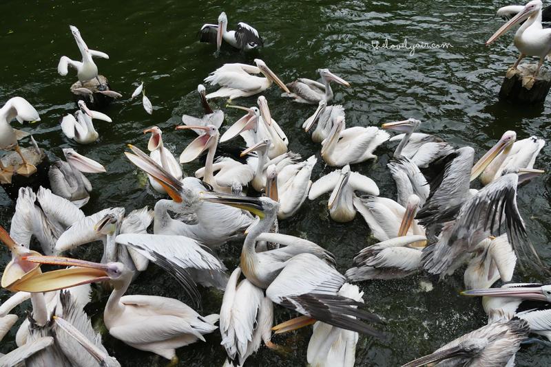 Jurong-Bird-Park-lovelyair-11