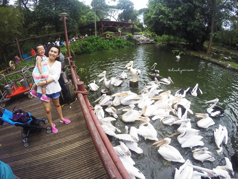 Jurong-Bird-Park-lovelyair-13