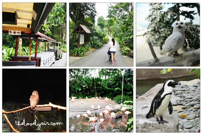 Jurong-Bird-Park-lovelyair-2