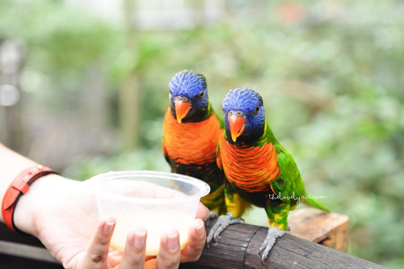 Jurong-Bird-Park-lovelyair-3