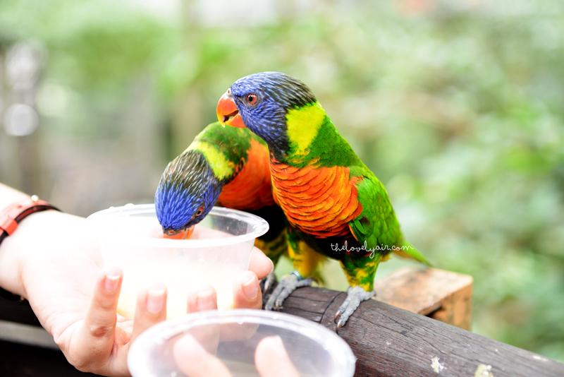 Jurong-Bird-Park-lovelyair-4