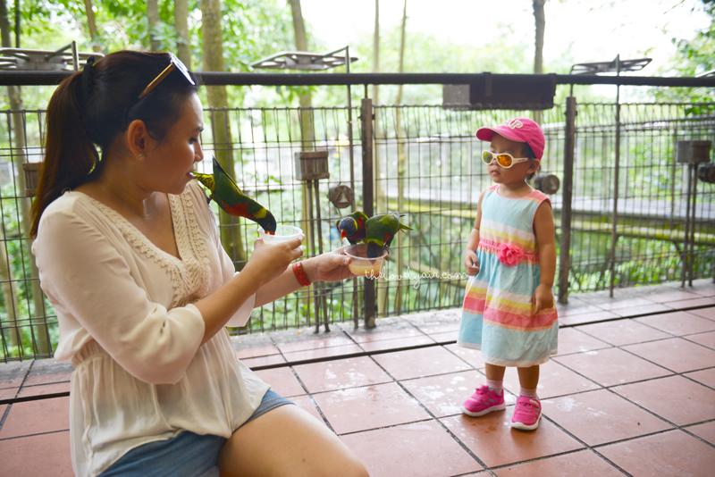 Jurong-Bird-Park-lovelyair-5