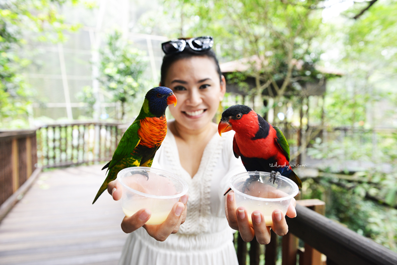 Jurong-Bird-Park-lovelyair-7