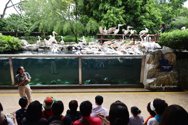 Jurong-Bird-Park-lovelyair-8