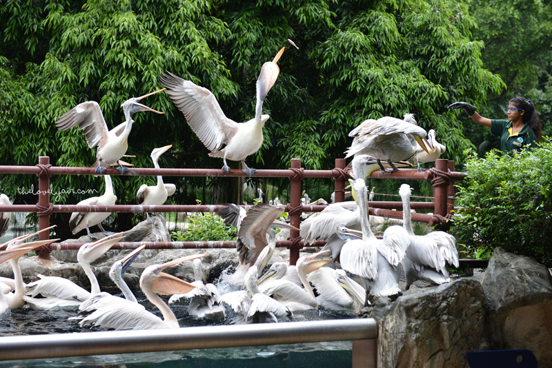 Jurong-Bird-Park-lovelyair-9