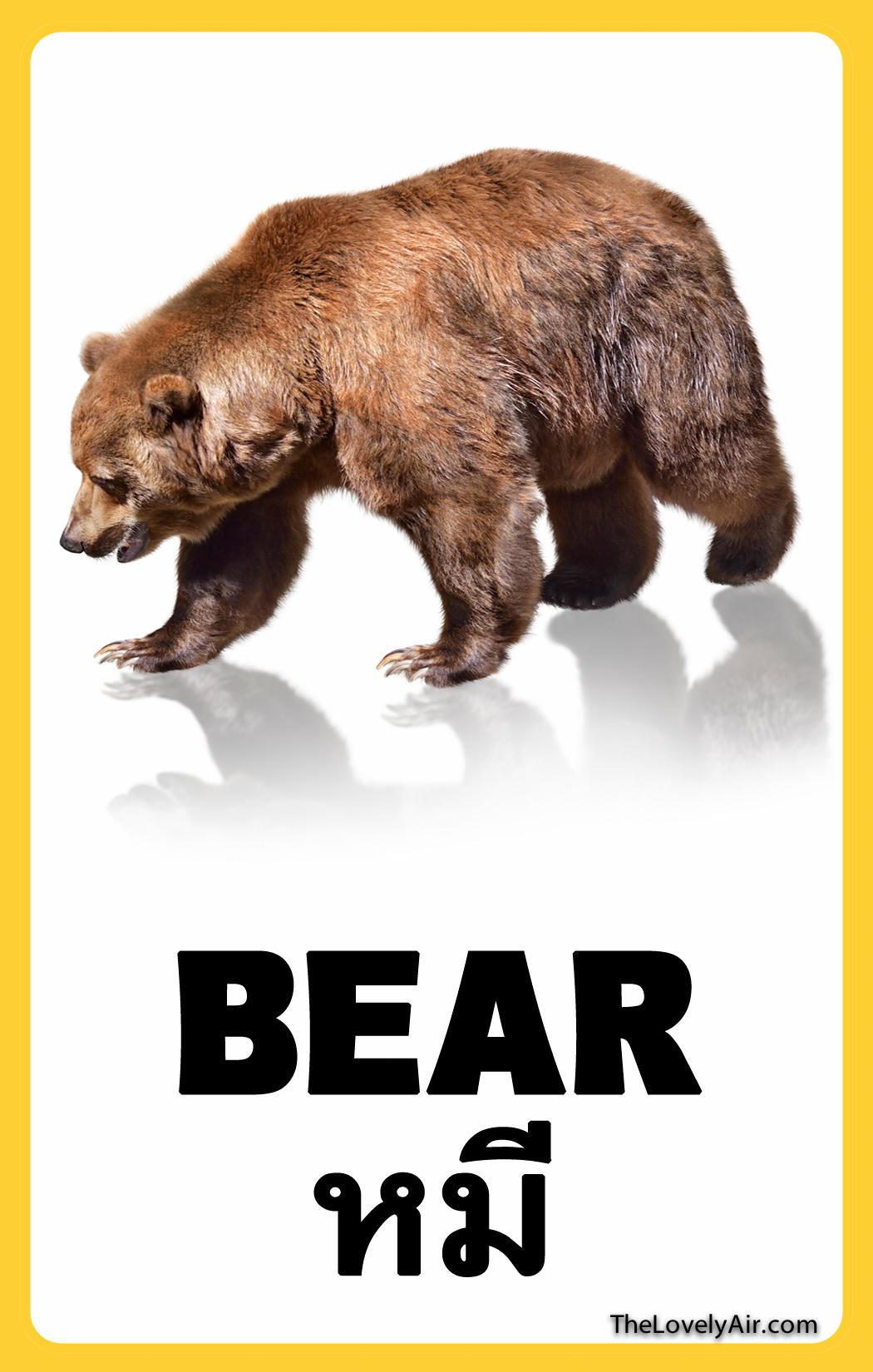 FlashCard---Bear