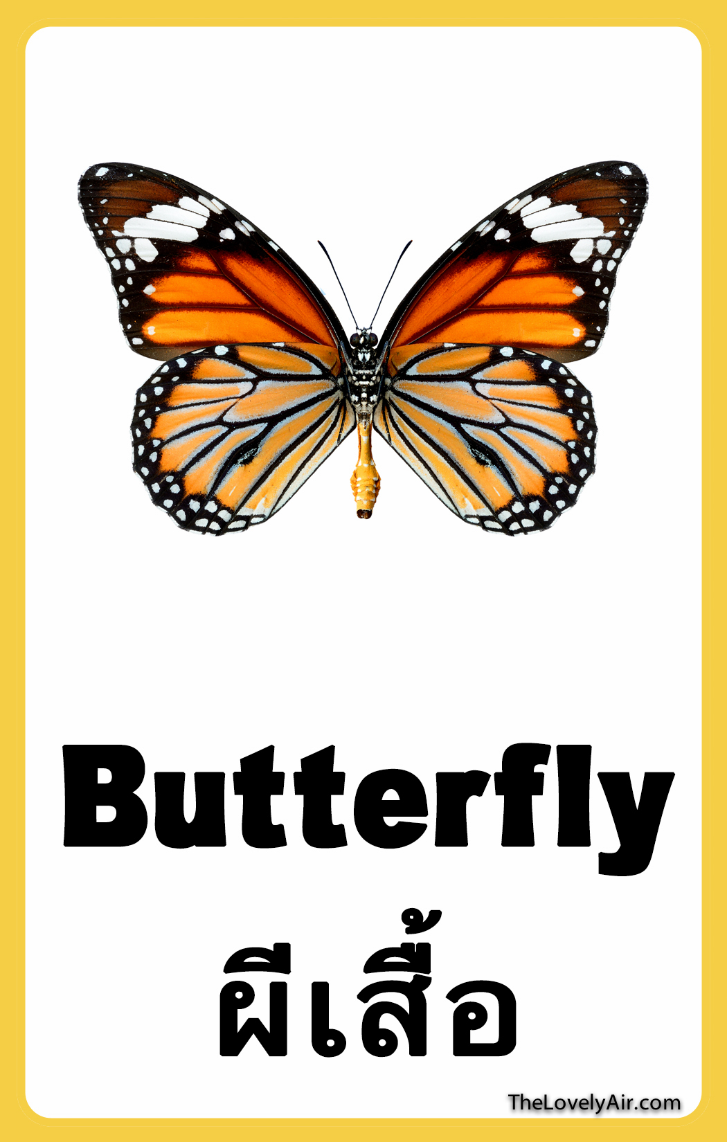 FlashCard - Butterfly