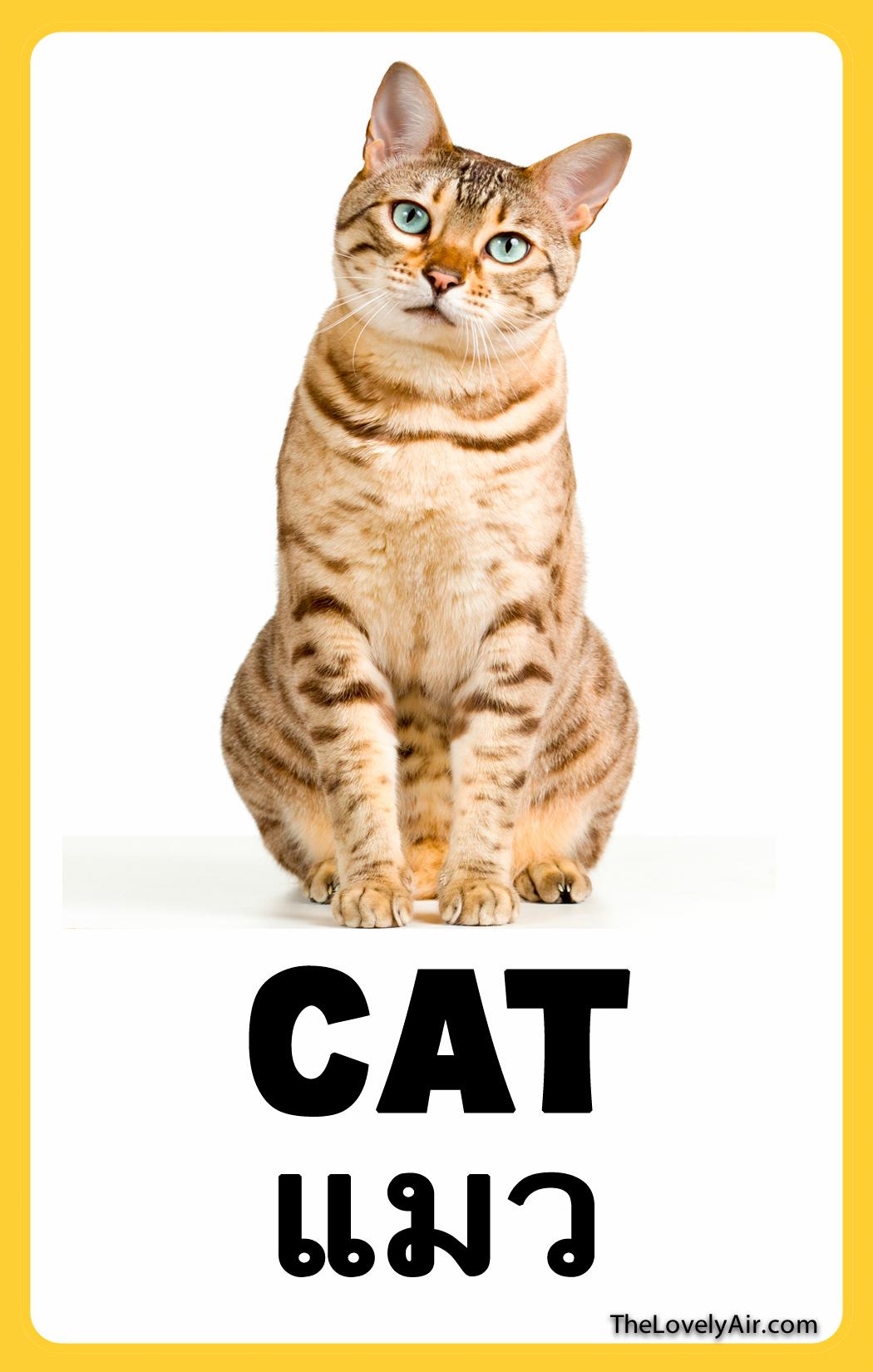 FlashCard---Cat
