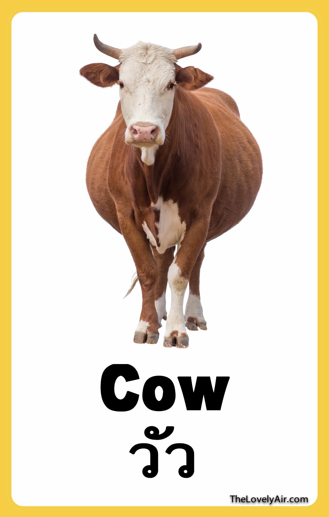 FlashCard - Cow
