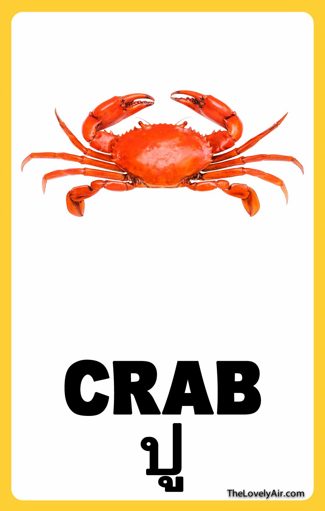 FlashCard---Crab