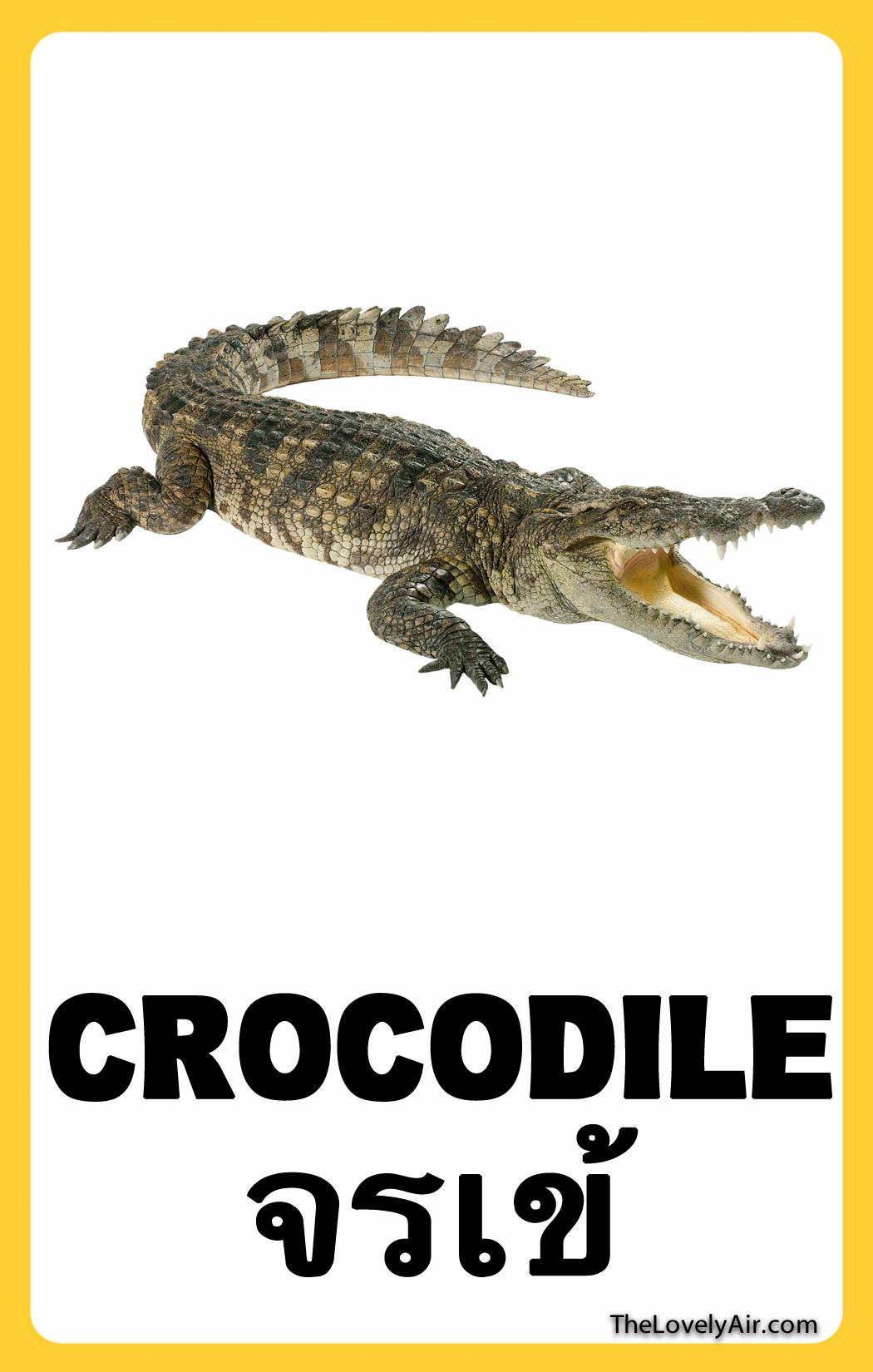 FlashCard---Crocodile