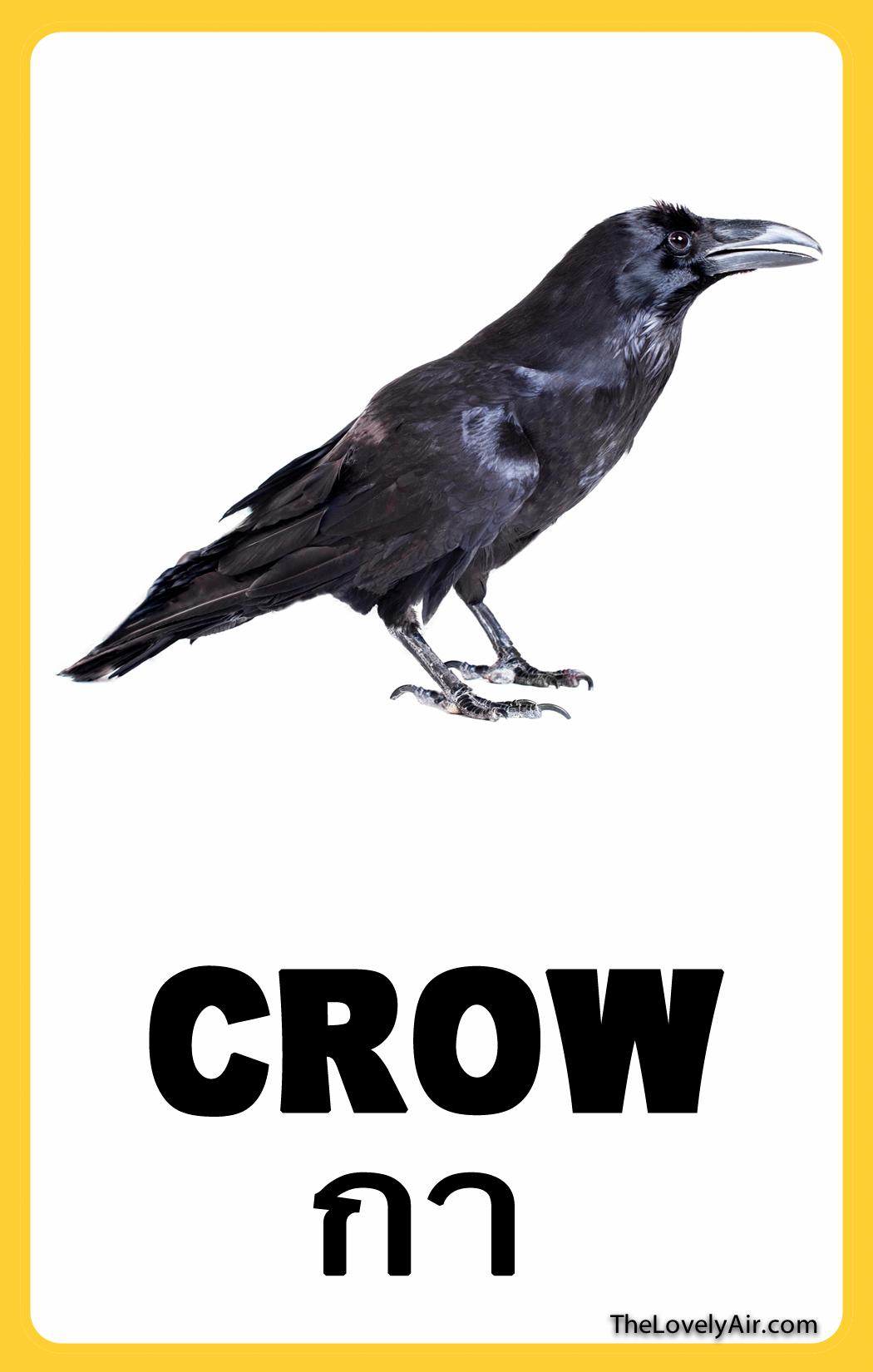 FlashCard---Crow