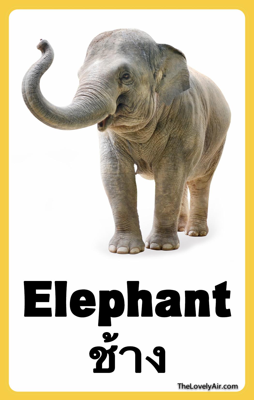 FlashCard - Elephant