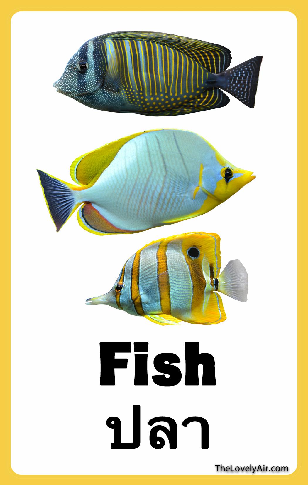 FlashCard - Fish