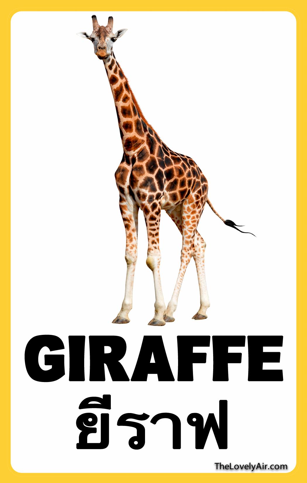 FlashCard---Giraffe