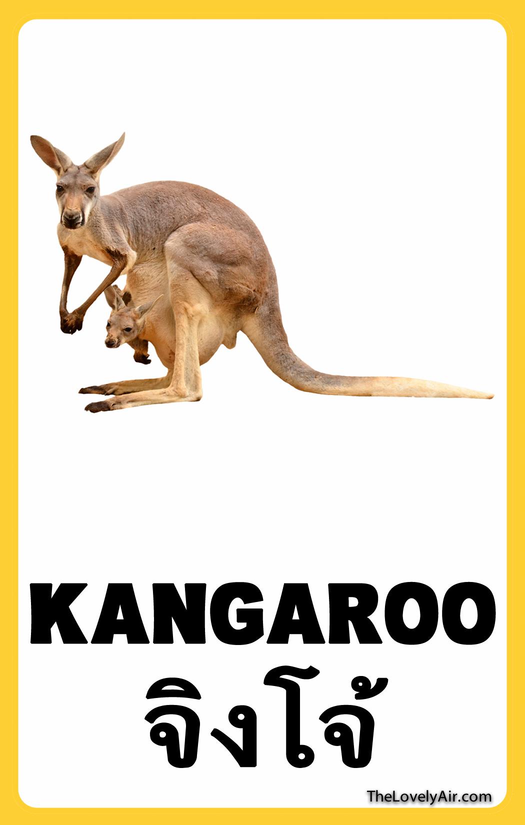 FlashCard---Kangaroo