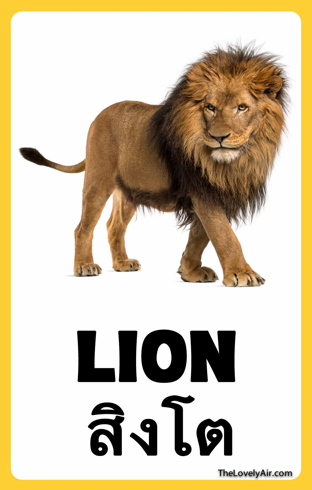 FlashCard---Lion