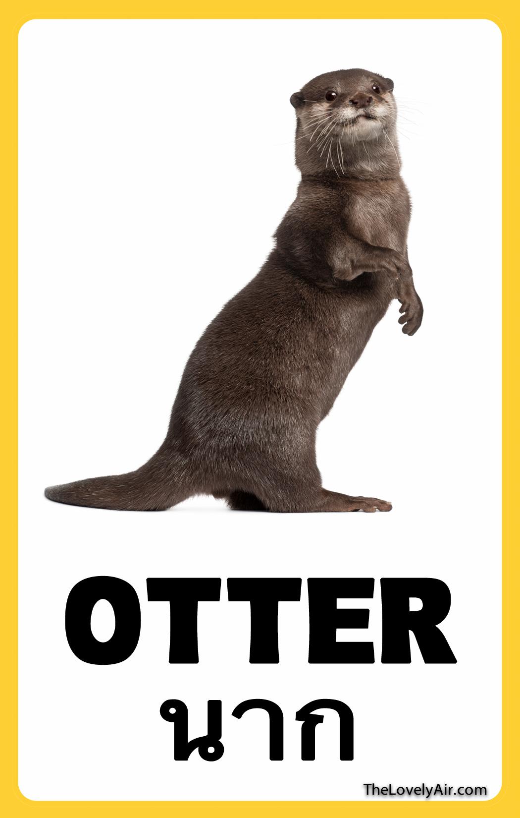 FlashCard---Otter