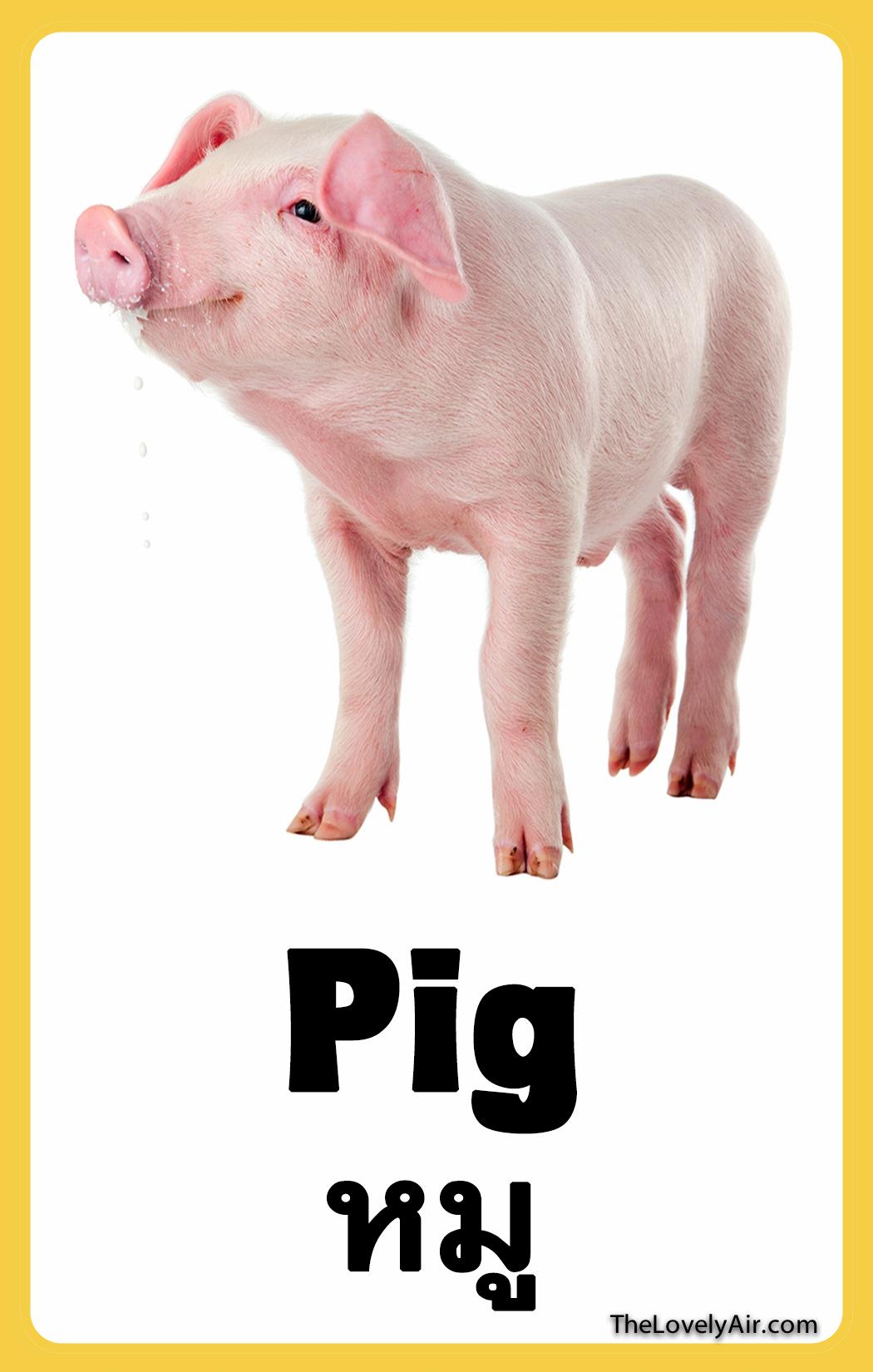 FlashCard - Pig