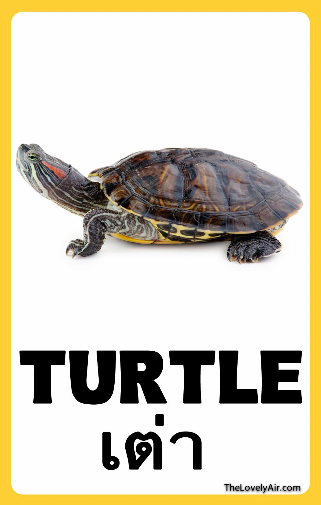 FlashCard---Turtle
