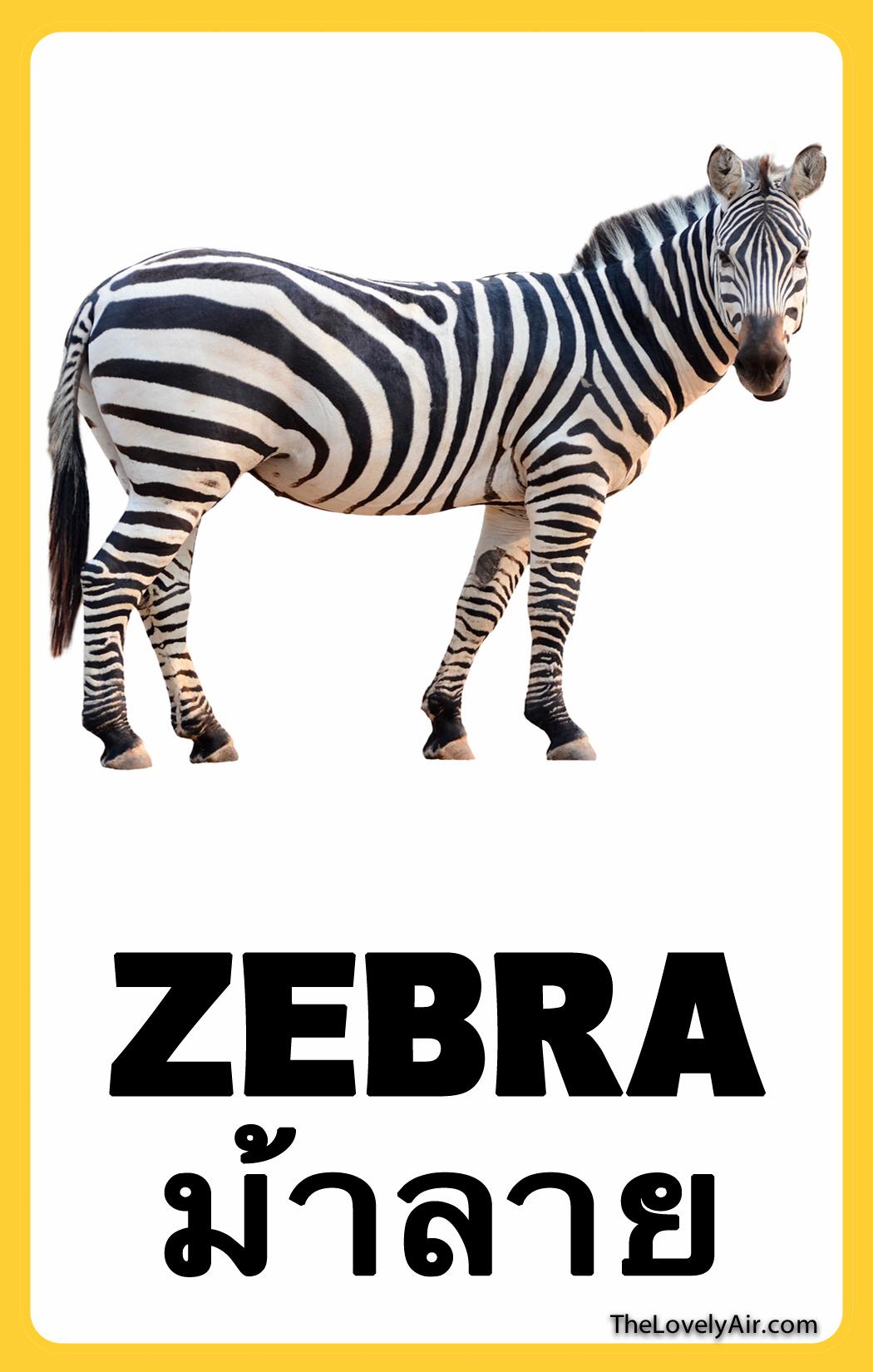 FlashCard---Zebra