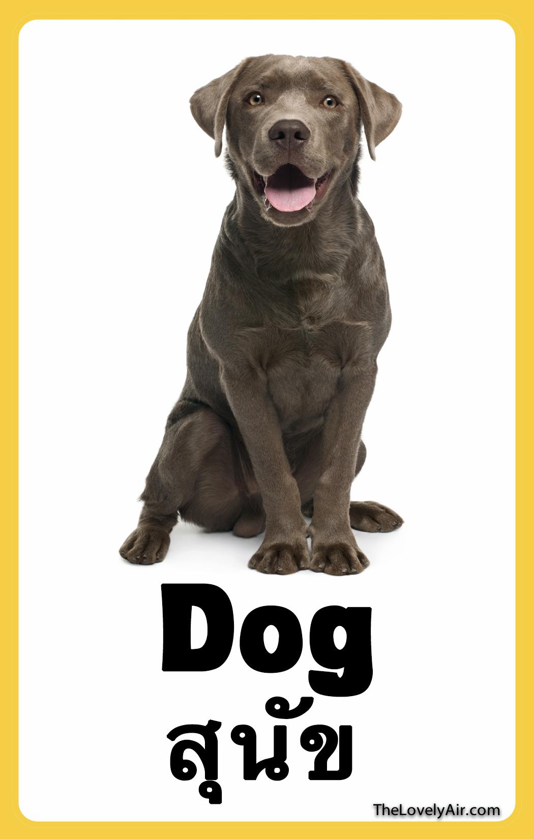 FlashCard - dog