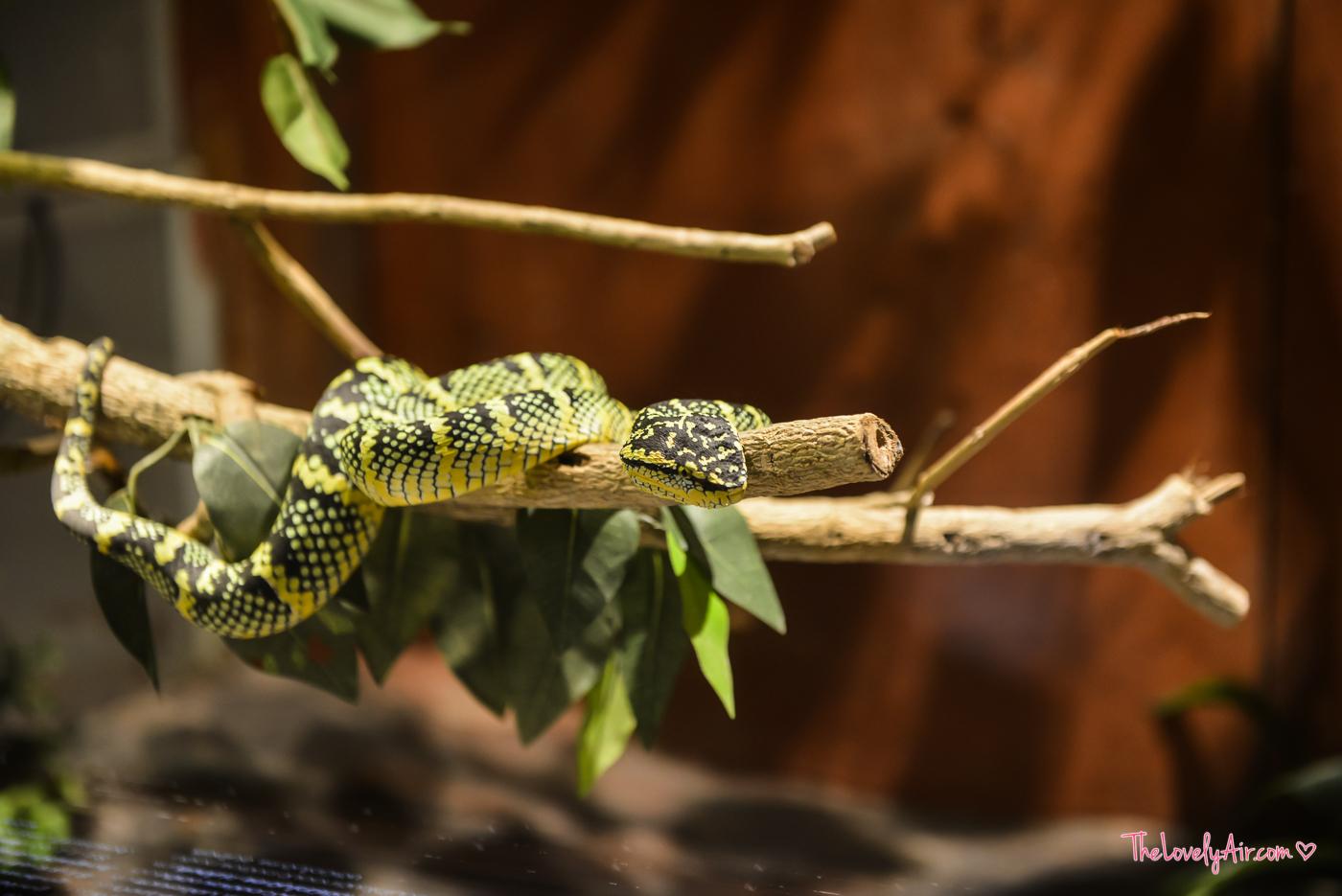 Siam Serpentarium RZ-14