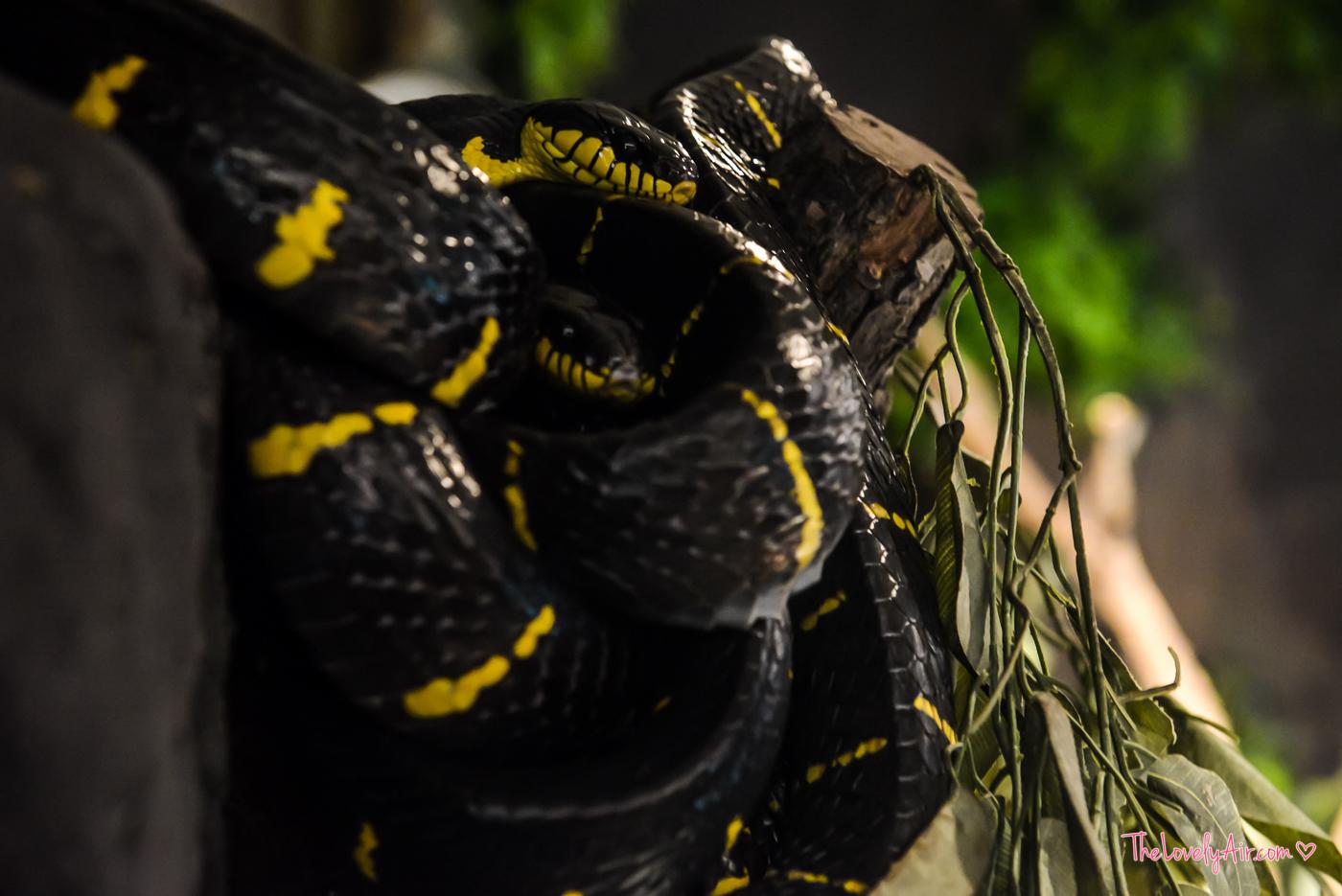 Siam Serpentarium RZ-16