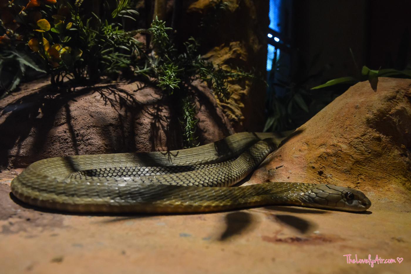 Siam Serpentarium RZ-18