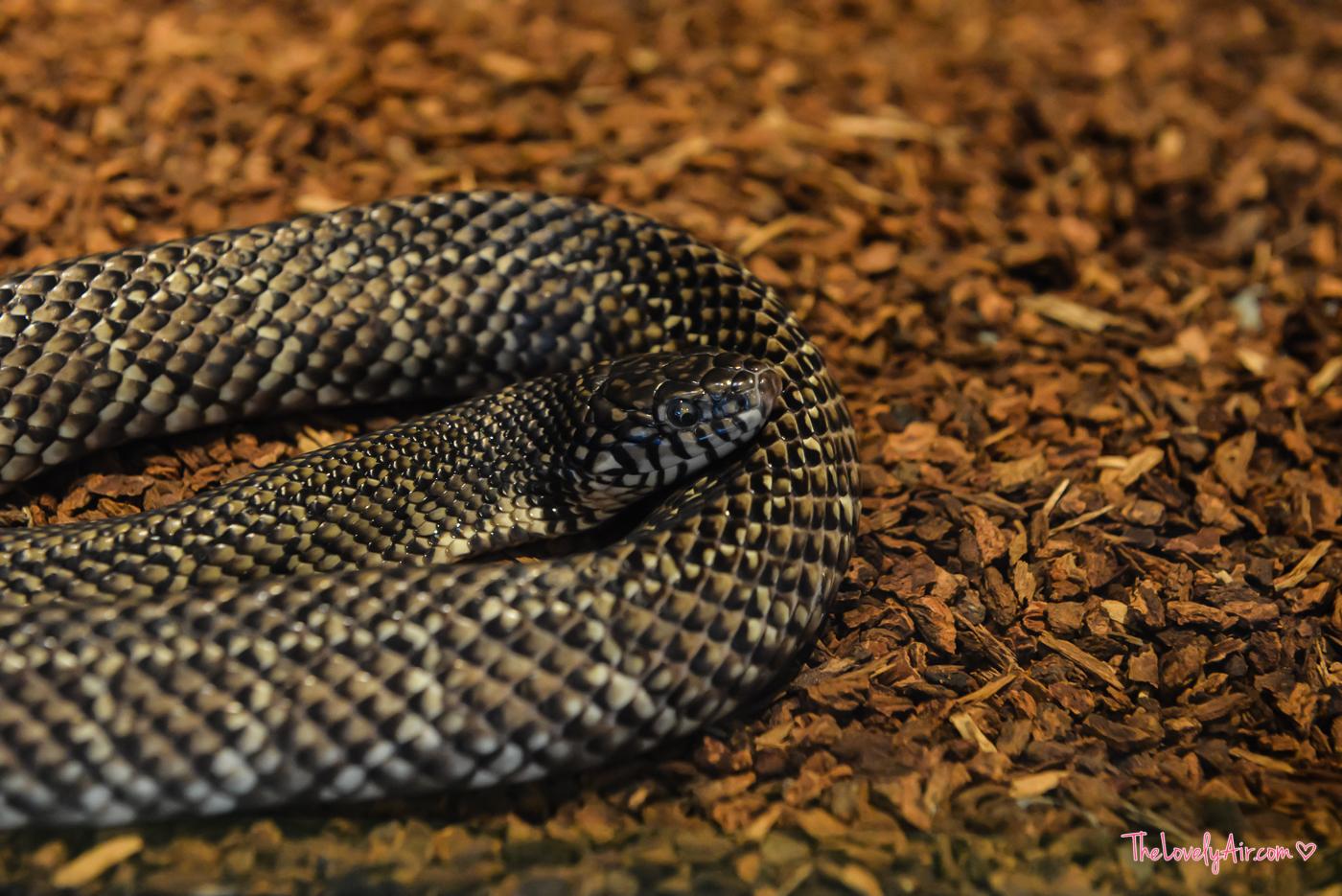 Siam Serpentarium RZ-21