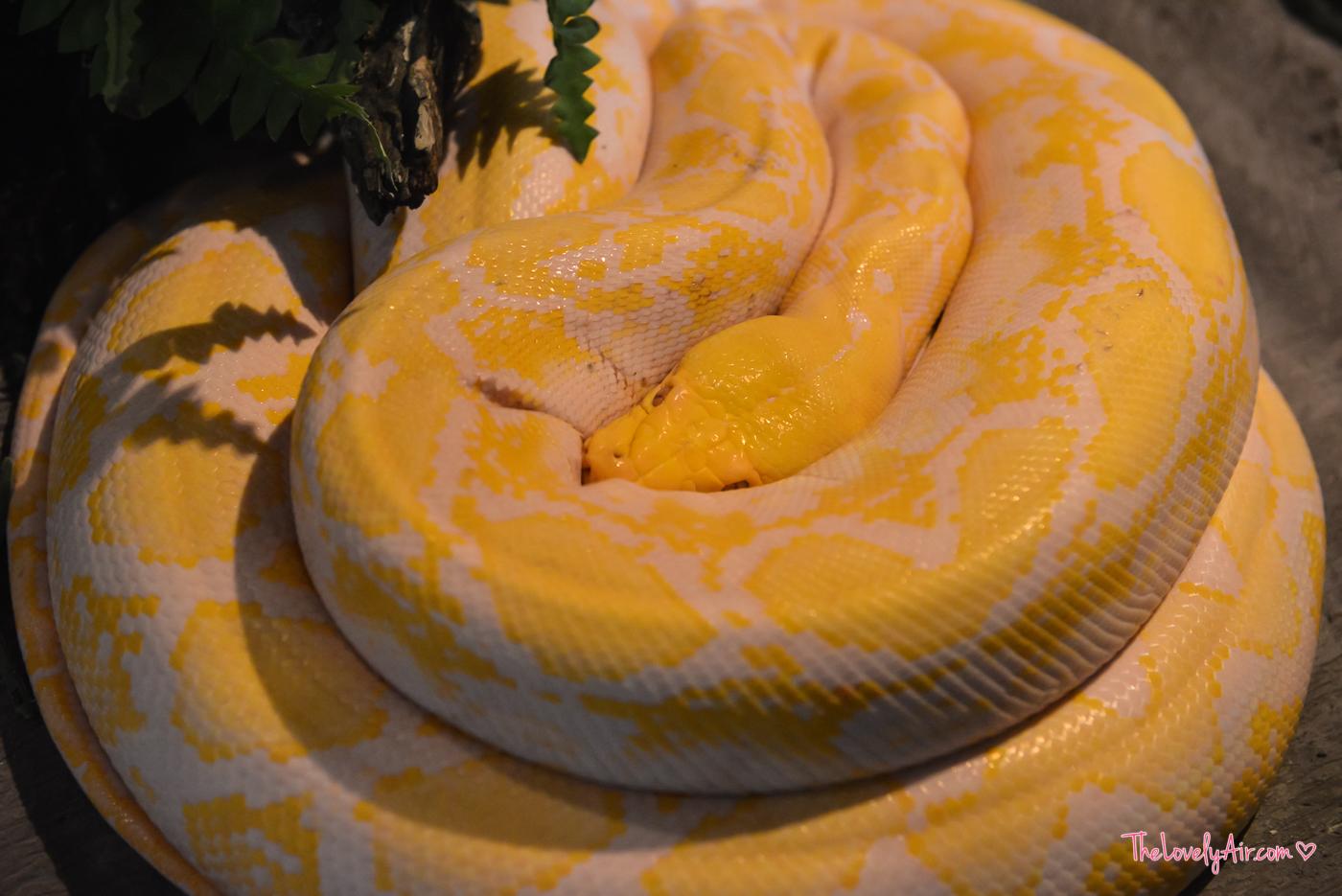 Siam Serpentarium RZ-24