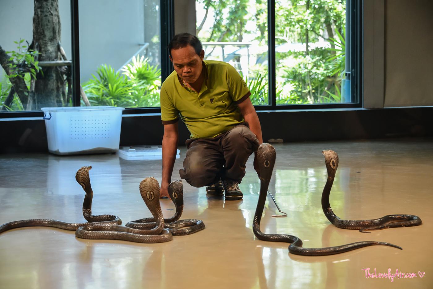 Siam Serpentarium RZ-30