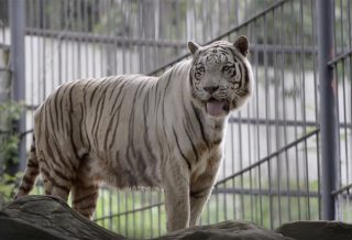 Bonanza Exotic Zoo เขาใหญ่
